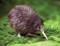 Kiwi Encounter © Destination Rotorua