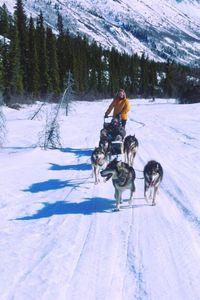 Yukon dogsledding