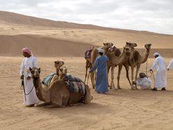 Desert Camp ©Lorraine Silvester