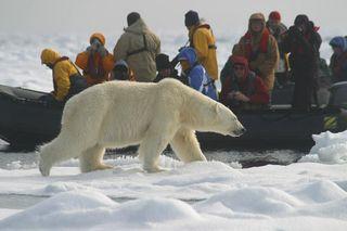 Spits-zodiac-polar-bear