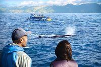 Kaikoura-whale3