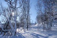 Sweden-ski-sun-through-trees