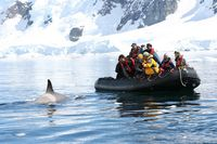 Ant-pen-zodiac-whale