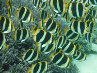 Lord Howe marine life