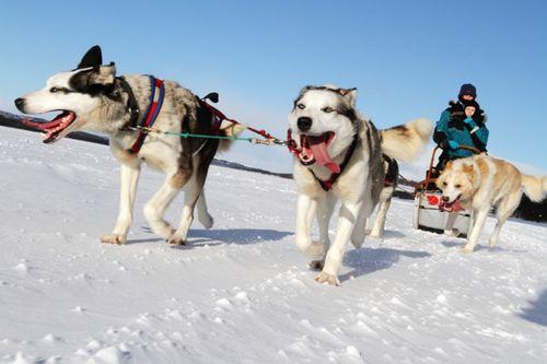 Huskies-on-the-move-WillGray