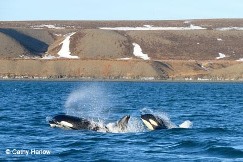 Whalefest1_480px-wide